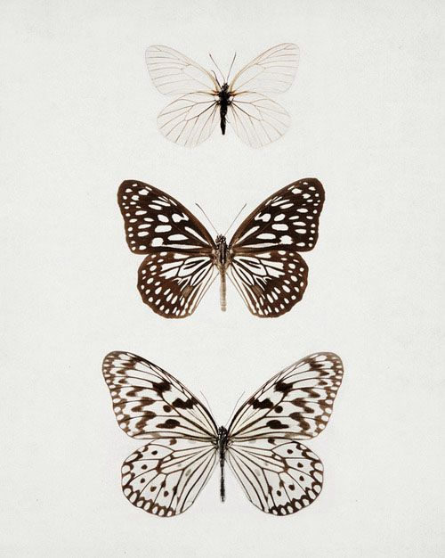Butterflies ♥ Andy W <3 Be Here Now www.beherenowfilmcomingsoon.com