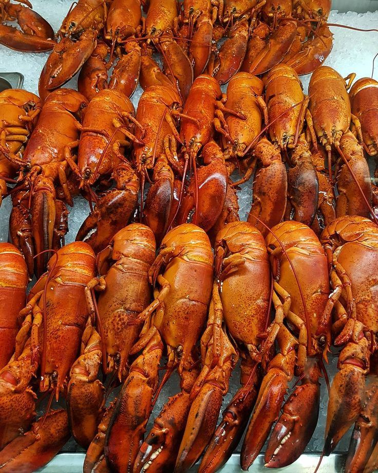 The rumours are true! There are lobsters for sale at the airport!!!