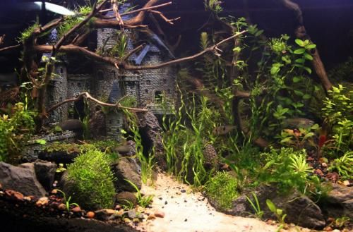 40 gallon planted tank with castle