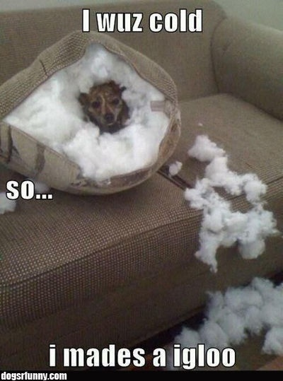 I mades a igloo / Dogs R Funny (funny,dog,cute)