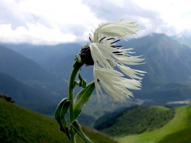 Ветер и цветок. Притча 0