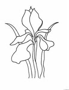 Coloring Page Iris Flower