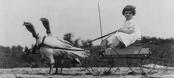 Turkey wagon, turkey drawn, Childs wagon