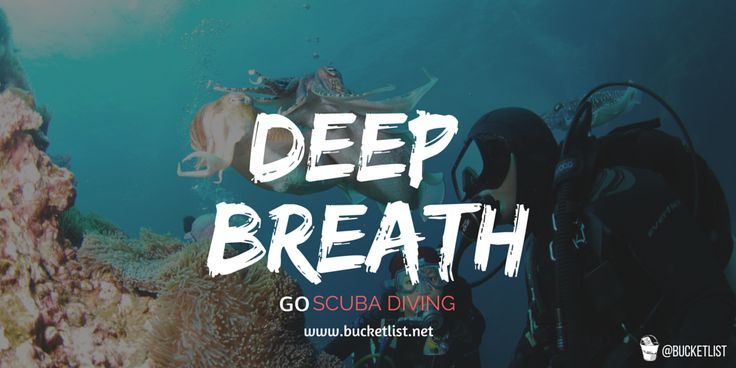 Real-life Finding Dory. #xthelist and see the ocean's hidden treaures -> https://market.bucketlist.net/?q=scuba