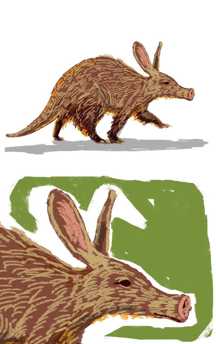 Animals - children illustration on Behance