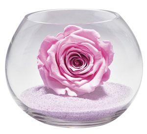 Rose stabilisée rose bonbon dans son vase boule