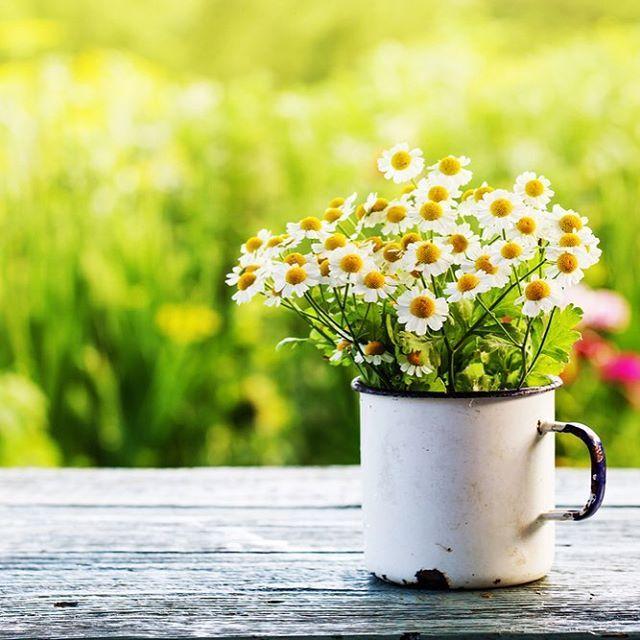 Herkese harika bir hafta diliyoruz! Tatil yaklaştıkça keyifler de yerine geliyor😍😍 #milliyet #milliyetemlak #tatil #holiday #vacation #daisies #papatya #çiçek #floral #flowers #nature #doğa #enamel #emaye #greens