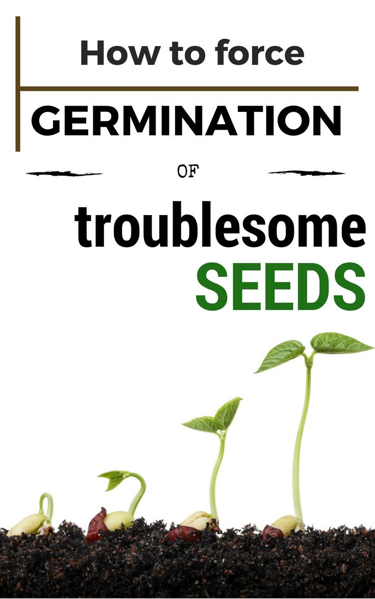 how to grow seeds without soil