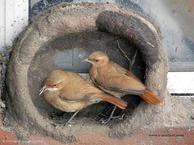 Birds Engineering Skills