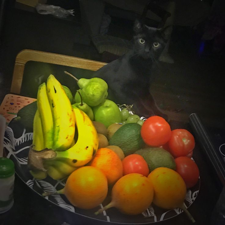 Olivia pásame una fruta...🍌🍏🍐 La bebe de la casa. 😻 #lavidadeoliv #gata #gatita #gatica #minino #kitty #kittycat #kitten #home #hogar #casa #fruit #fruta #instacat #baby #bebe