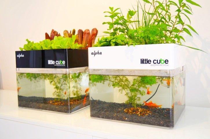 Home aquaponics buscar con google gardening for Hydroponic fish tank diy
