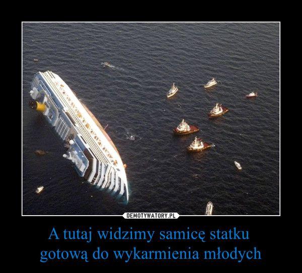 A tutaj widzimy samicę statku gotową do wykarmienia młodych –