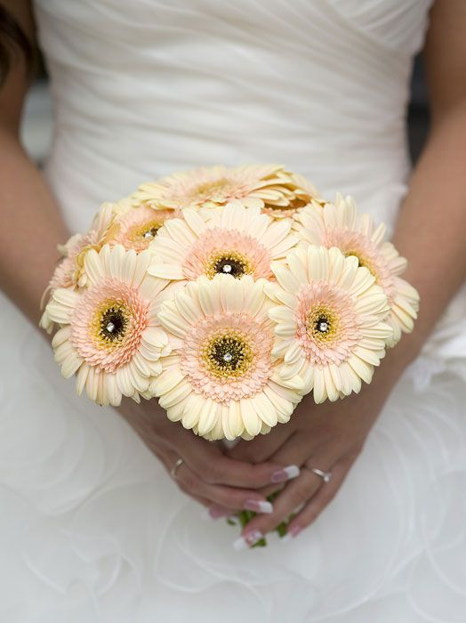 Cosmic Flower Shop: Pale Peach Gerbera