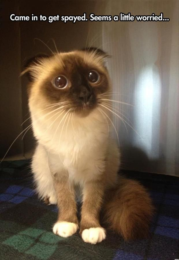Funny Cats - The Cat Seems Worried (265 Pics)