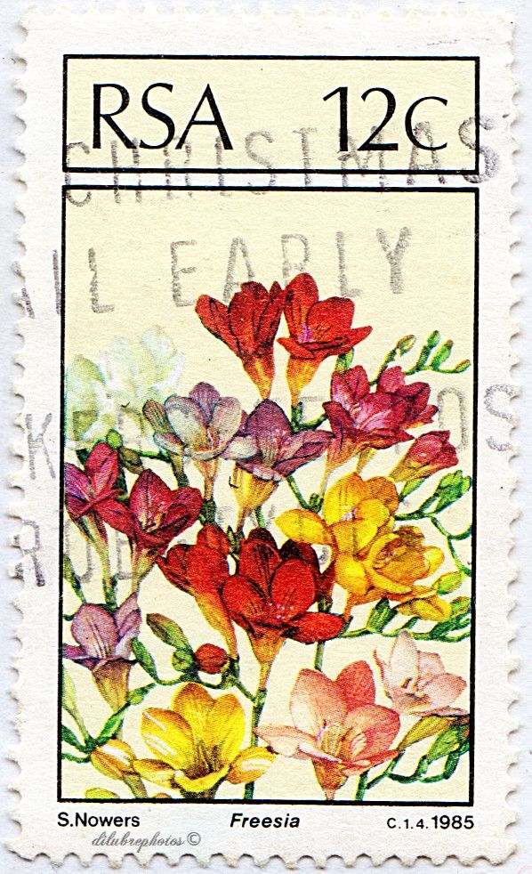 Republic of South Africa.  INDIGENOUS FLOWERS.  FREESIA.  Scott 656 A243, Issued 1985 Aug 23, Litho., Perf. 14 1/2 x 14, 12c. /ldb.