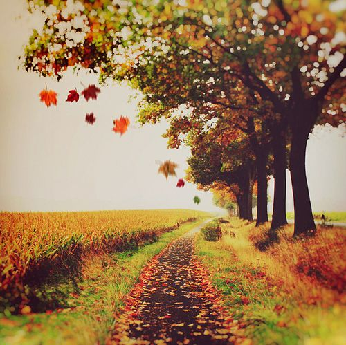 .Fall Leaves, Country Things, True Colors, Country Roads, Autumn Leaves, Autumn Fall, Autumn Nature, Robert Frostings, Falling Leaves