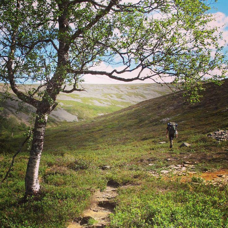 Urho Kekkonen National Park in Finnish Lapland. Photo by Saariselän Sanomat www.saariselansanomat.fi #summer #summerinlapland #hiking #trekking #finnishlapland #lapinluonto #kesä #tunturi #ukkpuisto #lappifani #ukpuisto #paratiisikuru #vaellus #huoleton #virkistys #lapinkesä
