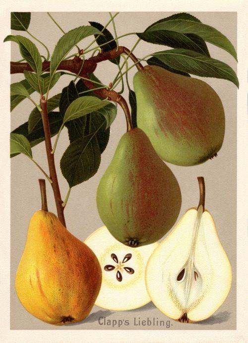 BUND / Alte Obstsorten kaufen