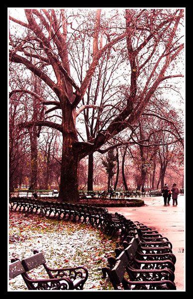First Snow, Cismigiu Park,  Bucharest, Romania