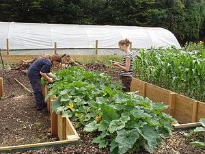 Raised Vegetable Garden Beds Pinterest