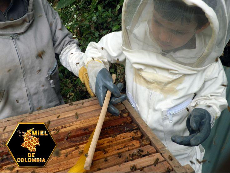 Enseñar a los niños a usar el cepillo para que puedan mover las abejas.