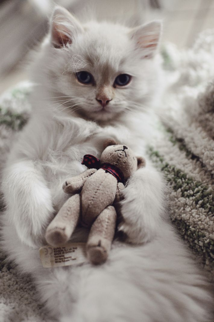 Cat and his new teddy bear