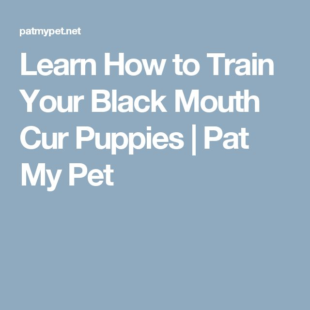 Learn How to Train Your Black Mouth Cur Puppies | Pat My Pet