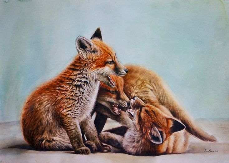 81 best fox images on Pinterest Foxes, Fox and Fox art - best of coloring page of a red fox