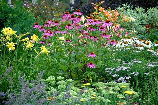 Perennial border photo by dick conrad flower borders cottage gardens pinterest gardens - Perennial flowers for borders visual gardens ...