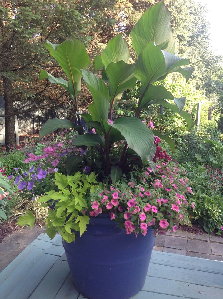 Tropicana Plant Home Depot