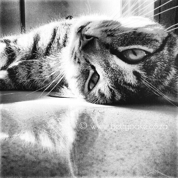 cause cats are cute /  #blackandwhite #instagram/ Photo by bettybake http://instagram.com/bettybake/