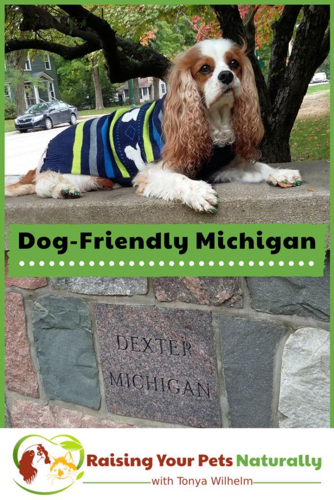 Dog Friendly Vacations And Hotels Michigan Pet