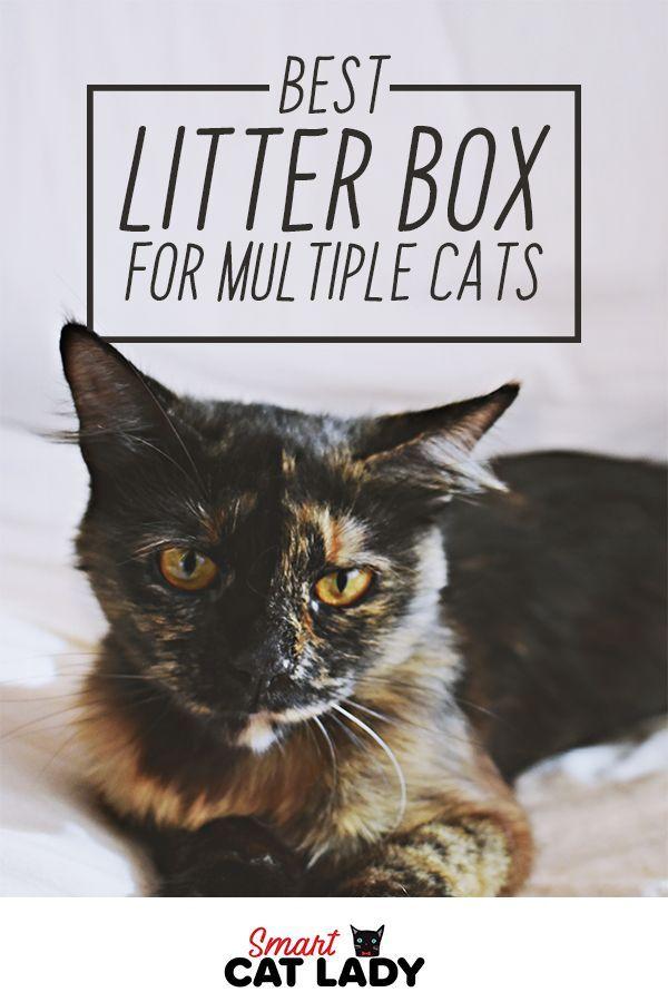 Best Litter Box For Multiple Cats Best Litter Box Litter Box Cats
