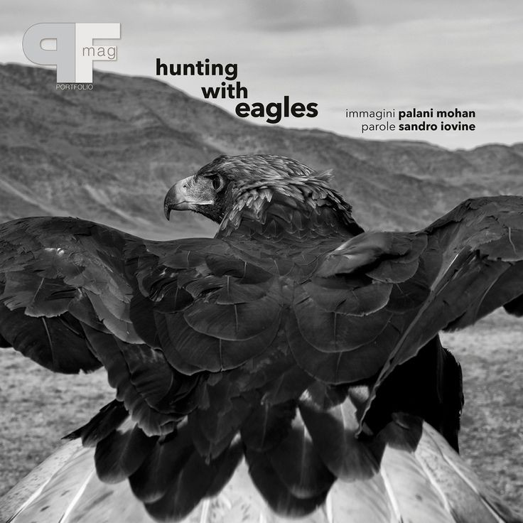 Hunting with Eagles by Palani Mohan