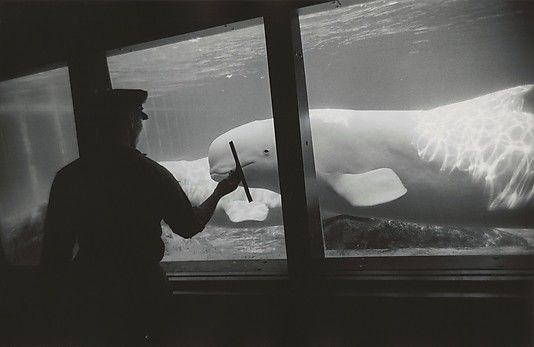 Garry Winogrand, New York Aquarium, Coney Island, 1967, gelatin silver print. © The Garry Winogrand Archive, Center for Creative Photography, The University of Arizona.