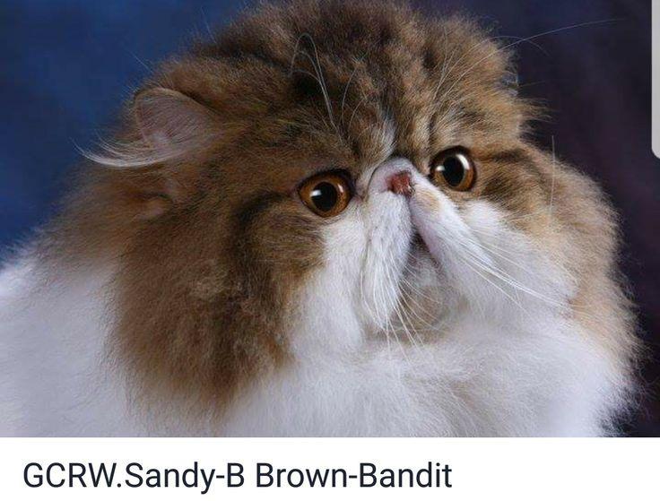 Sandra Sweet Cat Nude Photos 53