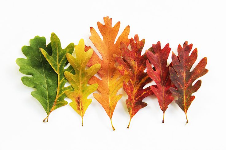 autumn palette  (mary jo hoffman)