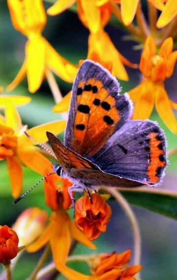 Shockingly beautiful butterfly on flowers! Love all the bright colors