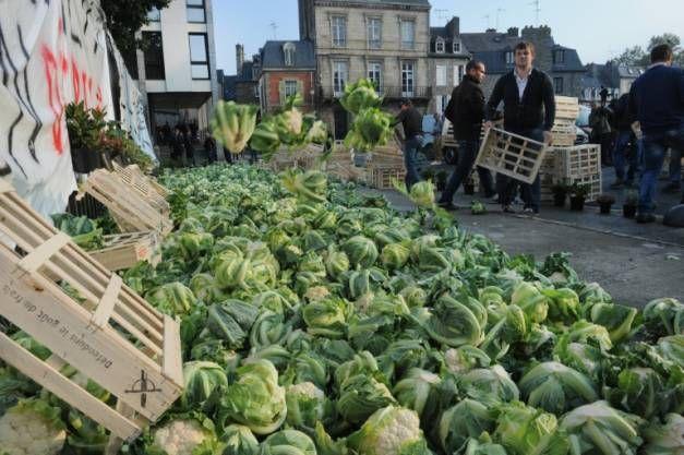 Temps trop doux et marchés saturés: des agriculteurs déversent des tonnes de choux-fleurs