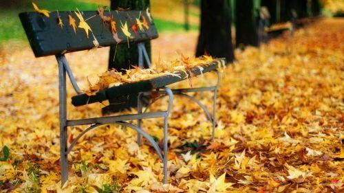 Autumn Leaves On A Park Bench Hd Wallpaper Nature Pinterest