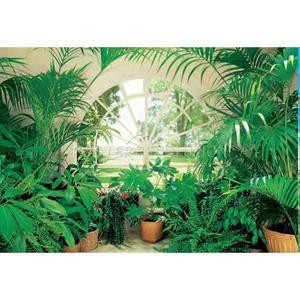 Garden Wall Murals | Winter Garden Huge Wall Mural Poster Indoor Plant | eBay