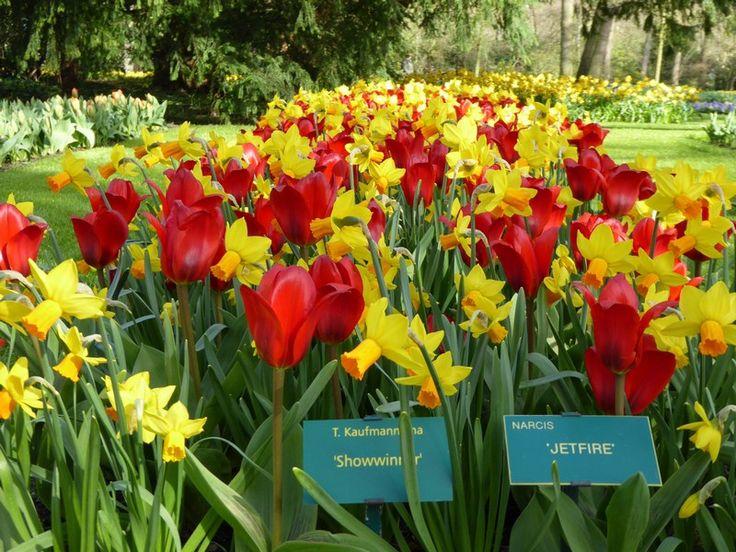 jardin_des-tulipes-hollande_keukenhof (5)