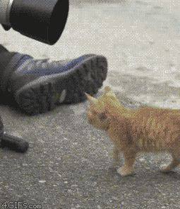 Awwww, this little kitty wants to get in on the act…
