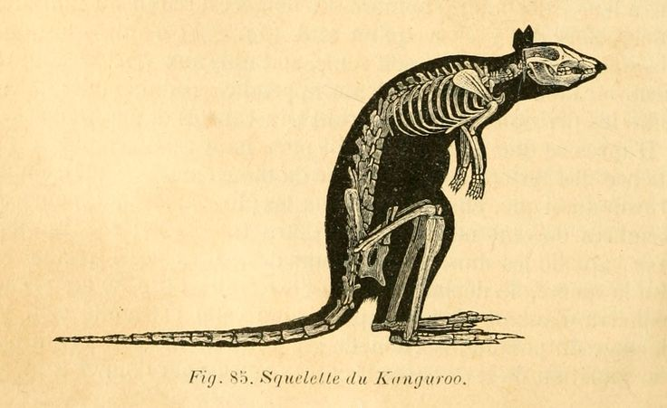 25 best ideas about kangourou dessin on pinterest petit - Dessiner un kangourou ...