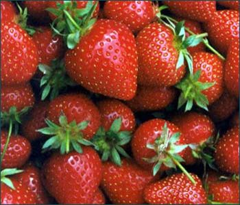 1000 ideas about grow strawberries on pinterest how to grow strawberries how to grow and to grow - Plant strawberries spring ...