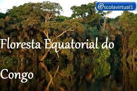 Resultado de imagem para floresta equatorial africana