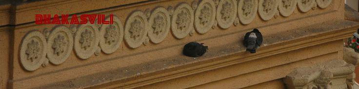 pigeon luv