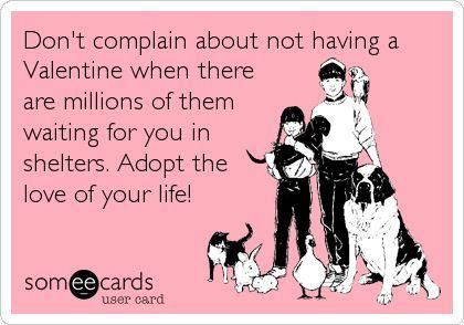 Adopt ♥ Foster ♥ Volunteer ..... Spay ♥ Neuter ♥ Don't Breed ... DONATE <3