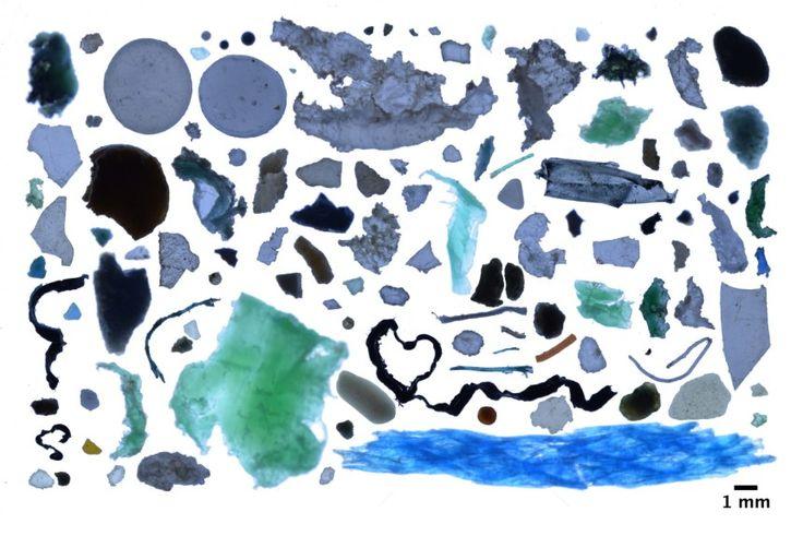 Há centenas de toneladas de fragmentos de plástico a poluir as águas do Ártico, arrastadas por correntes, diz um novo estudo.