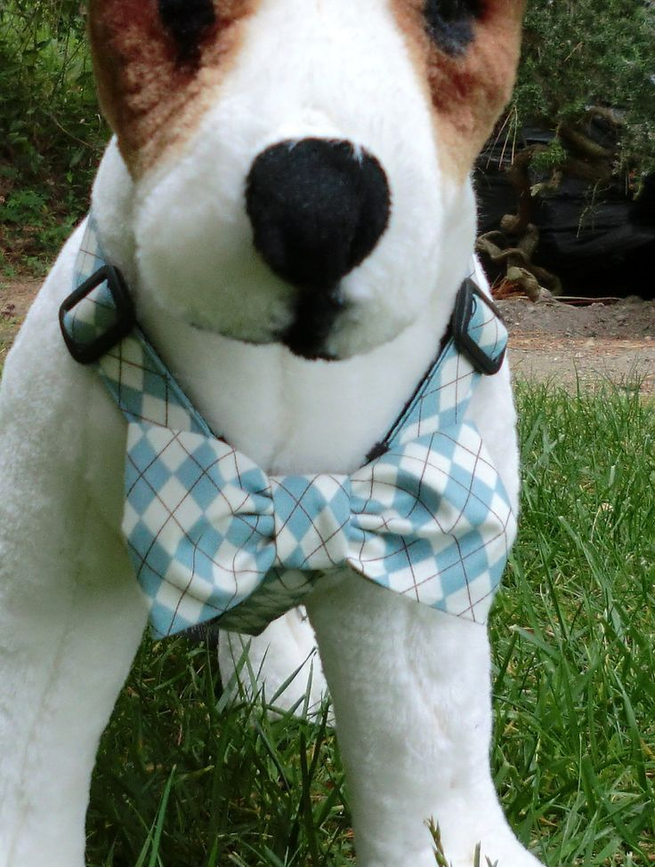 My boy Buster would look dashing in this!: Cutie Pets, Craft, Animals, Dog Ties, Dogs, Bow Ties, Bows, Dog Harness